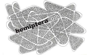 2008-09-02 - Hemiptera - Modyfier Process Part 089.jpg